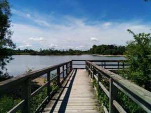 lake gibson 1